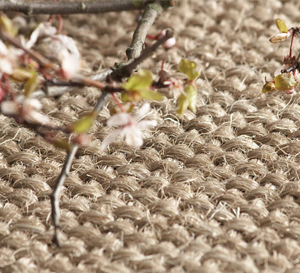 somerset Carpets Taunton